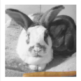 Bunny's Pet & Garden Sitting - Member Photo