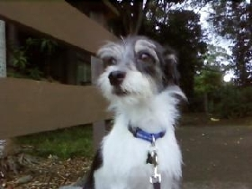 Pet Sitters in Kaneohe, Hawaii
