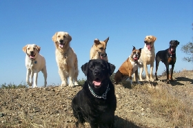 The  Dog Walker - Member Photo #3