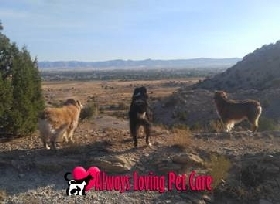 Pet Sitters in Grand Junction, Colorado