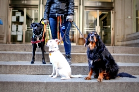 Hudson's Hounds NYC - Member Photo #2