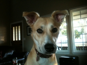 Vacaville Pet & House Sitting - Member Photo #3