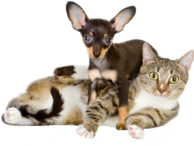 Pet Sitters in Brandon, Florida