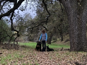 Under the Oaks Dog Walking and Pet Sitting - Member Photo