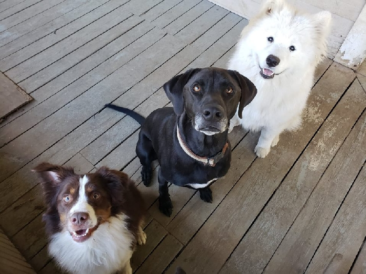 Traci's Total Pet Care | House Sitters in Orange, MA