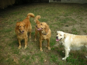 Pet Sitters in Bronxville, New York