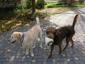 Pet Sitters in New Hope, Pennsylvania