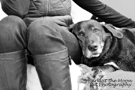 Pet Sitters in Easthampton, Massachusetts