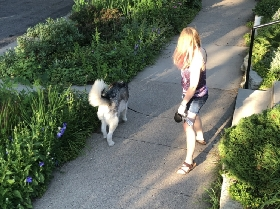Twin Cities Dog Walking and Pet Sitting - Member Photo #2