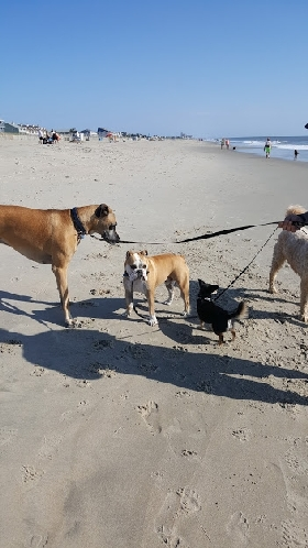 Dewey Dogs at The Beach - Member Photo #3