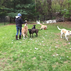 Dog Walkers in Seekonk, Massachusetts