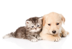 Pet Sitters in Norcross, Georgia