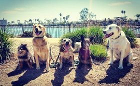 Long Beach Pet Care - Member Photo #2