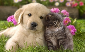 Pet Sitters in Rocky Hill, New Jersey