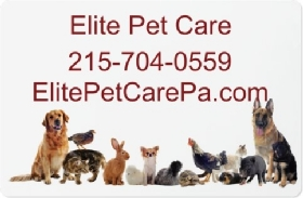 Pet Sitters in Springfield, Pennsylvania
