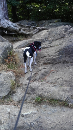 Hikes for Hounds - Member Photo #2