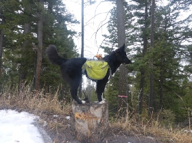 Pet Sitters in Bozeman, Montana