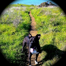 Pet Sitters in Sausalito, California
