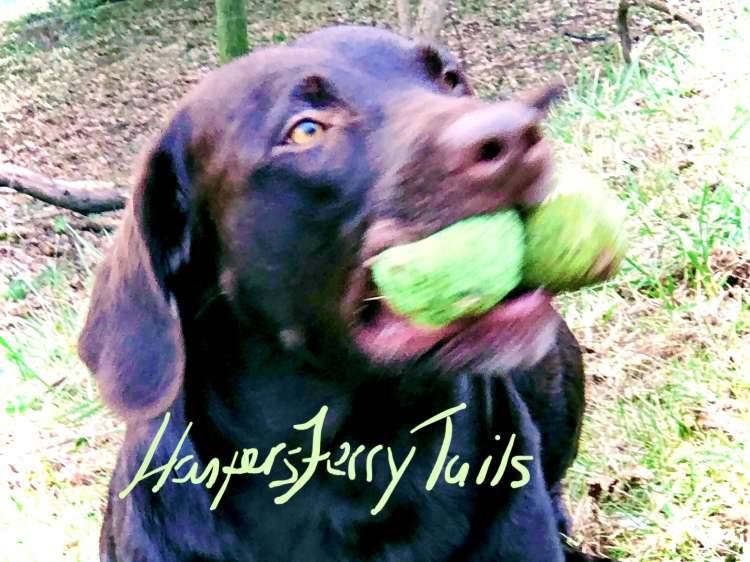 Harpers Ferry Tails Pet Sitting - Member Photo #3