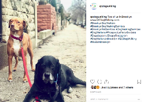 QC Dog Walking - Member Photo #2