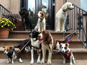 brooklyn dog walk LLC - Member Photo #2