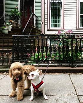 brooklyn dog walk LLC - Member Photo #3