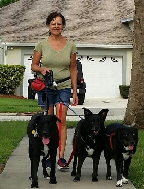 Sunward Pet Sitting and Dog Walking Service - Member Photo #2