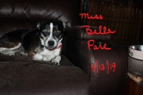 Becki's Guardian Angel Pet Sitting - Member Photo #2