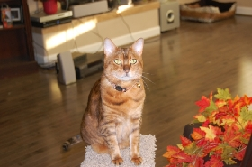 Pet Sitters in Hollister, California