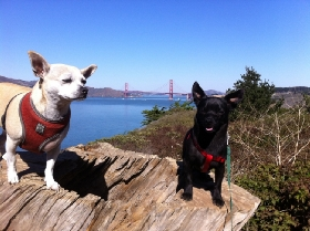 Pet Sitters in El Granada, California