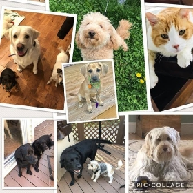 Pet Sitters in Long Valley, New Jersey