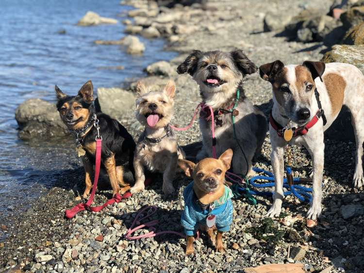 pint size pack walks - Member Photo
