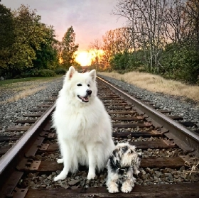 Pet Sitters in Buffalo, New York