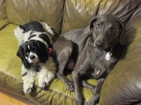 Sole Pooches - Member Photo #2