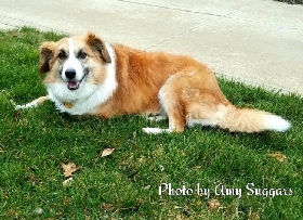Pet Sitters in Lewis Center, Ohio