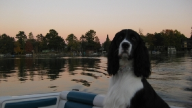 Pet Sitters in Madison, Wisconsin