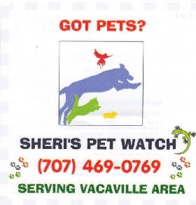 Pet Sitters in Woodland, California