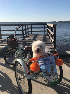 Pet Sitters in Pensacola, Florida