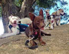 The Dog Hiking Club - Member Photo #2