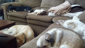 Pet Sitters in Holtwood, Pennsylvania